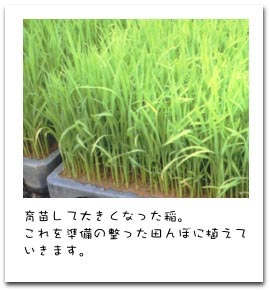 有機栽培・無農薬の米