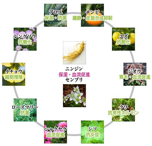 12種類の植物の図