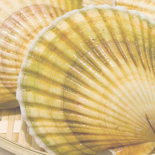 国産ホタテの貝殻を使用