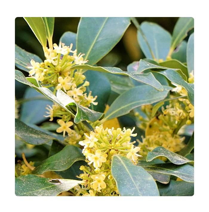 UU 天然はちみつ(モチノキ)非加熱・国産天然・オーガニック養蜂