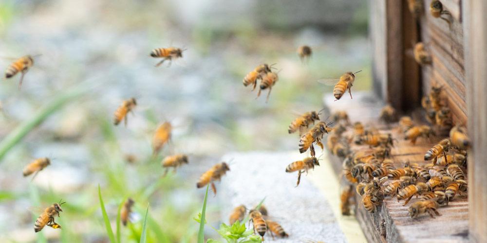 農薬残留検査結果と養蜂場の写真