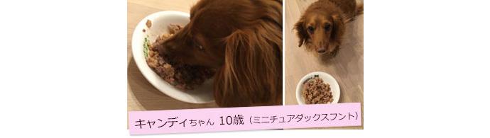 キャンディちゃん10歳(ミニチュアダックスフント)